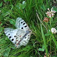 Natur- und Artenschutz